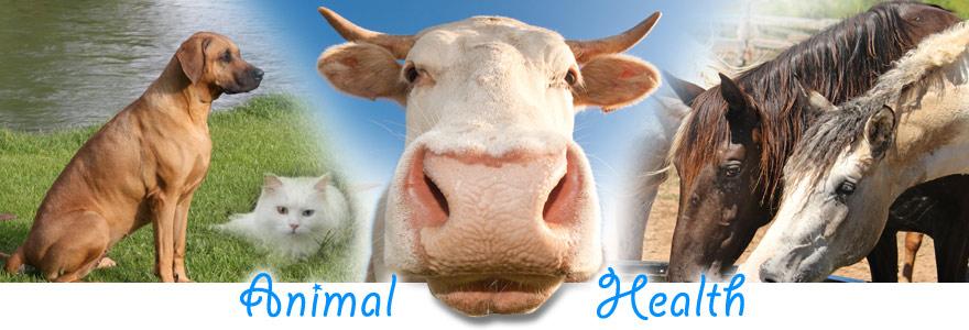 animal health research and deveilopment